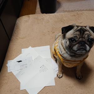 保護犬愛護団体からの御礼状が届く