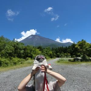 猛暑襲来!…夏の富士山中腹へ避暑に行ってみた