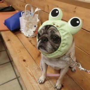 六実さんは、カエル顔?