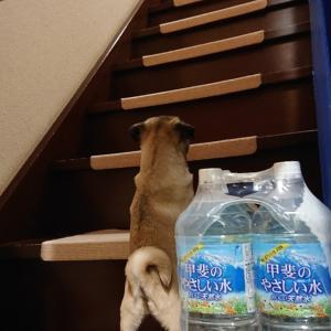 ビビり弥栄たんの階段事情