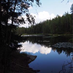 フィンランドの大自然を堪能しよう
