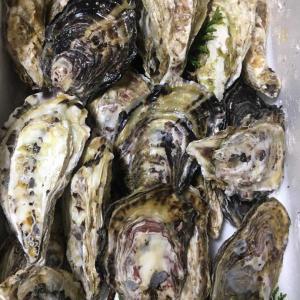 【ふるさと納税】牡蠣好きなら絶対オススメ 玄海町から牡蠣1.8kg来た!