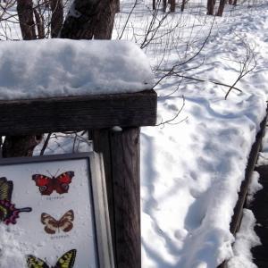 2021.1.3 雪の中の蝶