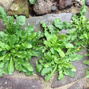 【安全 無害】環境に優しいおすすめの除草剤!実際に使ってみた感想