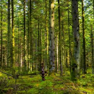 田舎育ちなのに林や森が大嫌いな変なオヤジです