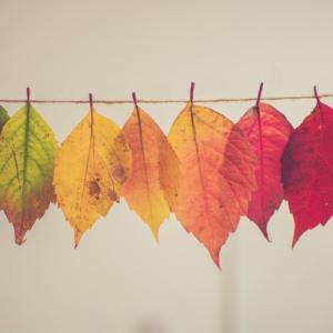 残暑厳しいですが、秋の気配を感じませんか?
