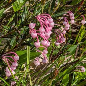 志賀高原 季節の花②