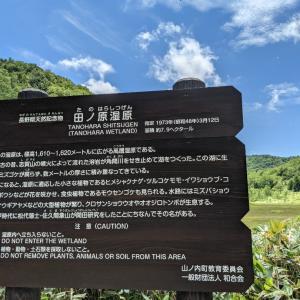 夏の志賀高原 田ノ原湿原②