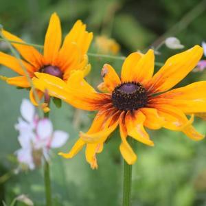 フローラルガーデンの花