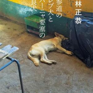 表参道のセレブ犬とカバーニャ要塞の野良犬 若林正恭