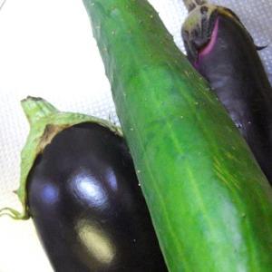 【今年の夏野菜、収穫編。】