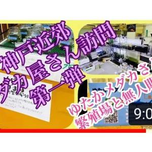 ふじやんメダカさんが…キタ〜YouTubeにアップされました