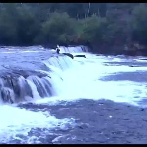 皆さんが教えてくれたアラスカのライブカメラ📹  この飛び跳ねる魚を見てると無性に懐かしいゲームしたくなってくるんだが何のゲームを連想してるんだかわからない…🎮 ゼルダにもちょっと出てくるなこういう瞬間🐟 どうぶつの森はまだ1時間くらいしかやってないから違う🙅♂️  飛び跳ねる魚イイねえ🐟🐟