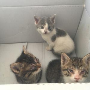 【動物病院事情】トルコでもし野良猫を保護したら?
