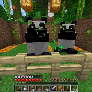 【マイクラ】それでもパンダを探して