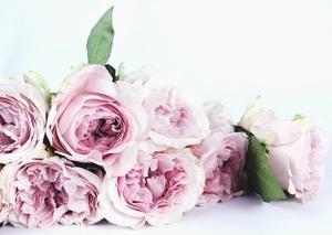 コロナとお花