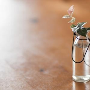 あなたの部屋に潤いを。花瓶で部屋を華やかにしませんか?