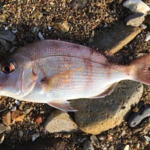早朝4時前に起きて、数10年ぶりの海釣り、釣果イマイチ、日焼けはひどい。けれど充実した