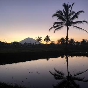 インドネシア・バリ島のセバツ村 のどかな田園風景に心が癒やされます