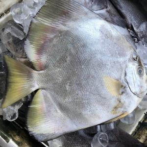 【インドネシアマカッサル】海岸レストランの新鮮な焼き魚