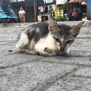 インドネシアは野良猫が多い⁈