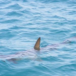 休息するサメの群れが壮観/Twitterで学ぶ英語(even)