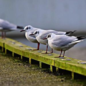 in a row の意味と使い方/Twitter で学ぶ英語