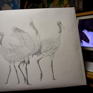 日本画「鶴」作成開始
