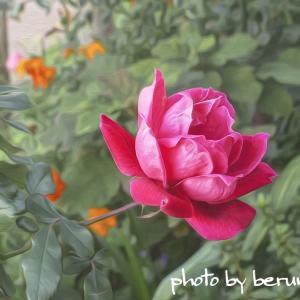 薔薇の表現