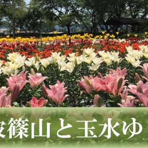 歴史と文化の城下町、日本遺産~丹波篠山~と初夏を彩るゆり園へ近場旅行