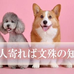 日本のことわざを英語にしてみよう(4)~三人寄れば文殊の知恵~
