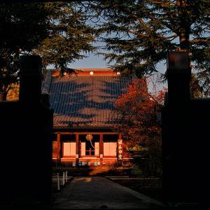 寛永寺根本中堂(散歩写真38)
