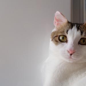 保護猫紹介その1。