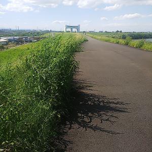 荒サイ左岸 羽根倉橋~関平橋の手前まで開通