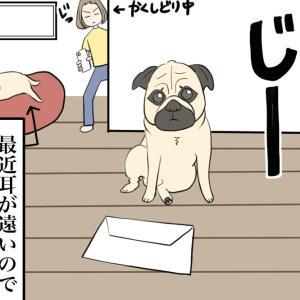 【続】手紙を届けてくれる配達犬