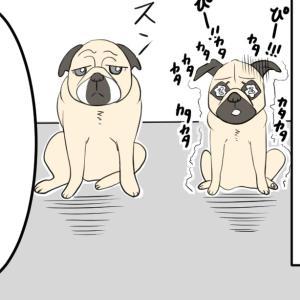 獣医さんでの予防接種で両極端な態度の二匹