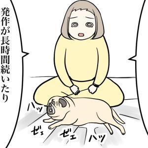 【老犬てんかん3】病院へ行く前にできること