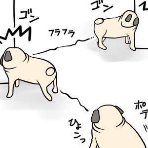 【老犬てんかん4】発作後の後遺症とは
