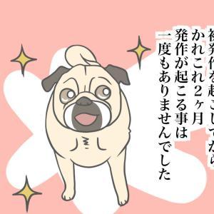 【老犬てんかん17終】ありがとう。またね