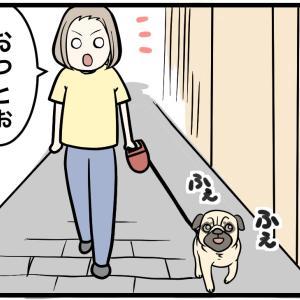 散歩中に見かけたあってはならないもの