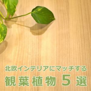 北欧インテリアにマッチする観葉植物5選