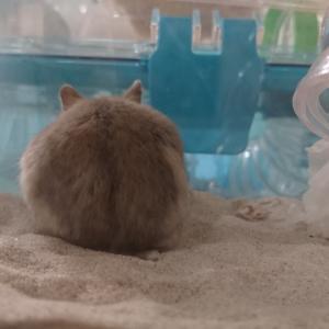 砂浴び用の砂vsトイレ用の砂?