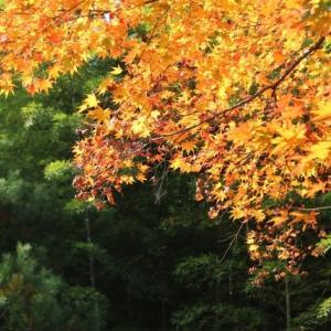 嵐山④ 天龍寺お庭その2