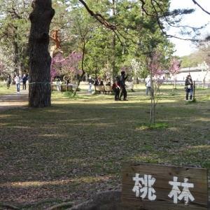 京都御苑・桃林。