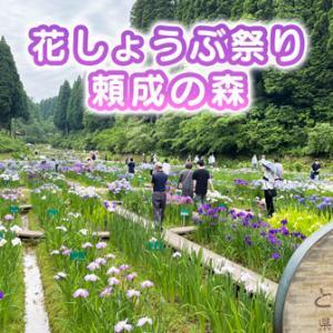 【頼成の森の花しょうぶ祭り2021】キレイだけど広い!!