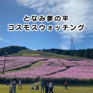 【夢の平コスモスウォッチング】行ってきた!砺波の写真映えスポット