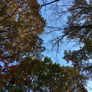 葉が全部落ちたら本格的な冬