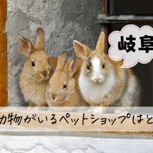 岐阜でおすすめの小動物を扱うペットショップ7選と飼いやすい小動物の紹介