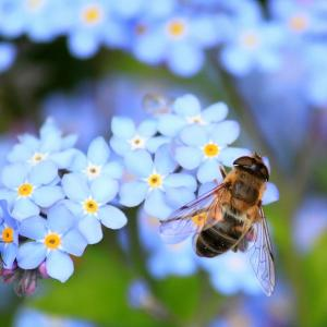 The Bee(みつばち)練習 Teaching Little Fingers to Play(トンプソン 小さな手のためのピアノ教本)