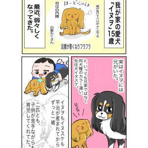 【犬】必ずくる別れ…1【家族】